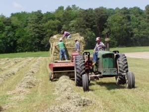 Hay baling 2
